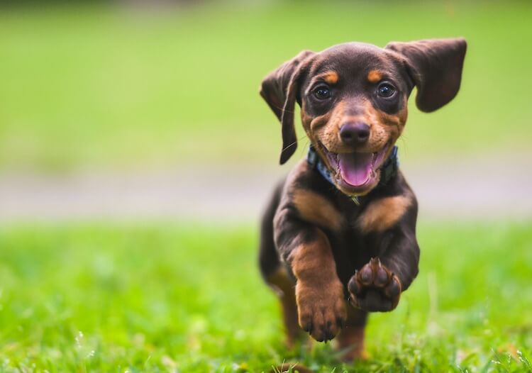 250 Dog Names: The Ultimate A-Z List of The Best Names For