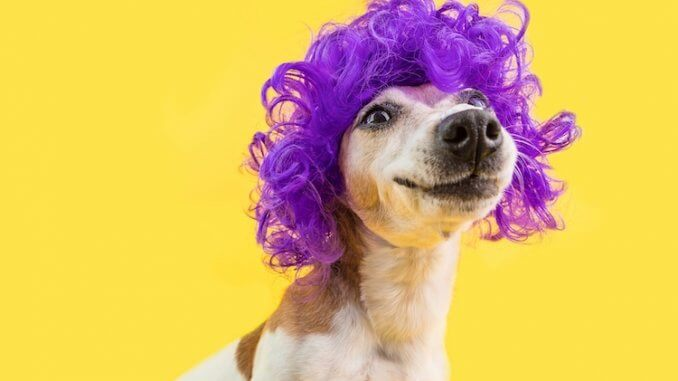 Dog Jokes Feature