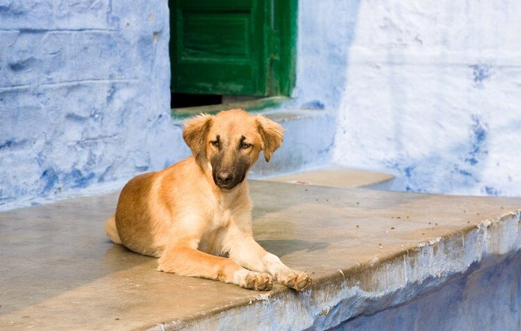 Indian Dog Names Feature