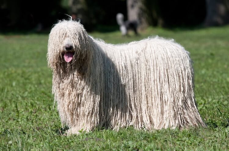 Mop Dog Feature