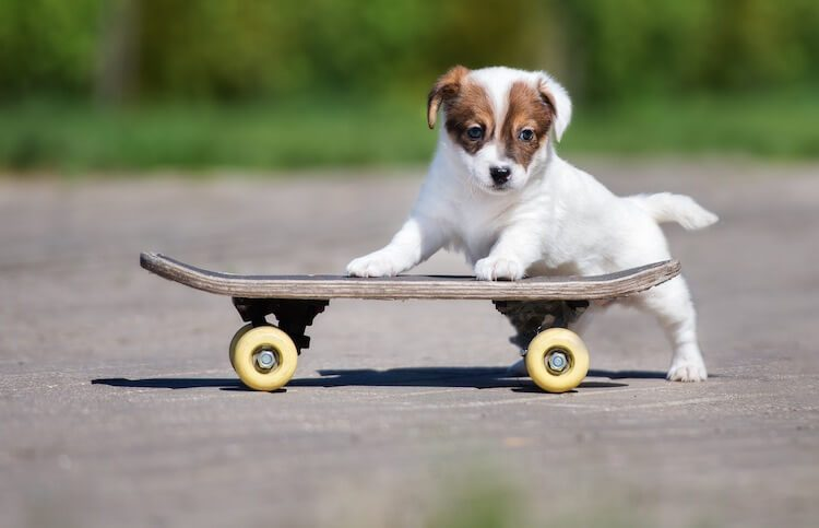 Puppy With A Skateboard