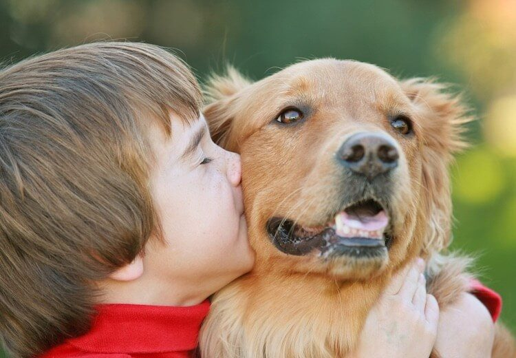 Red Golden Retriever with Boy