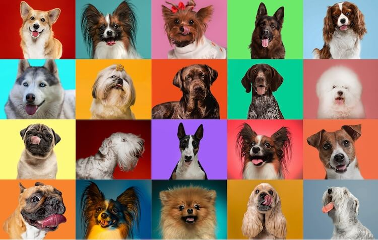 Small Dog Breeds Feature