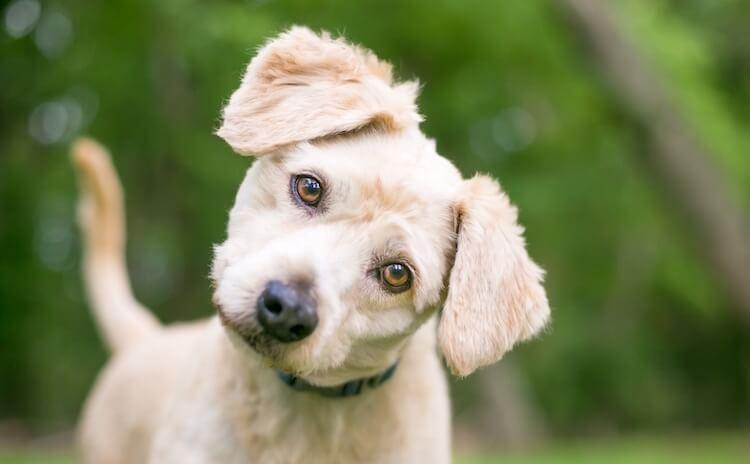 Choosing A Female Dog Name