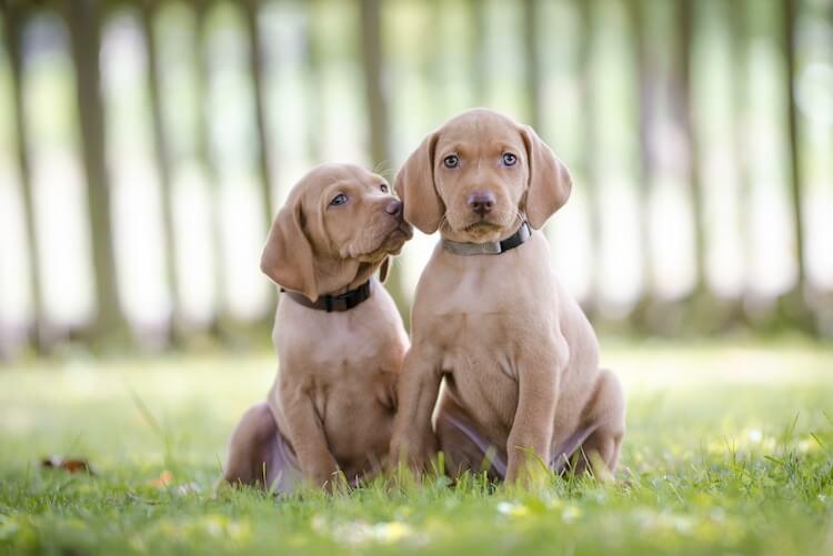 Cute Female Puppies