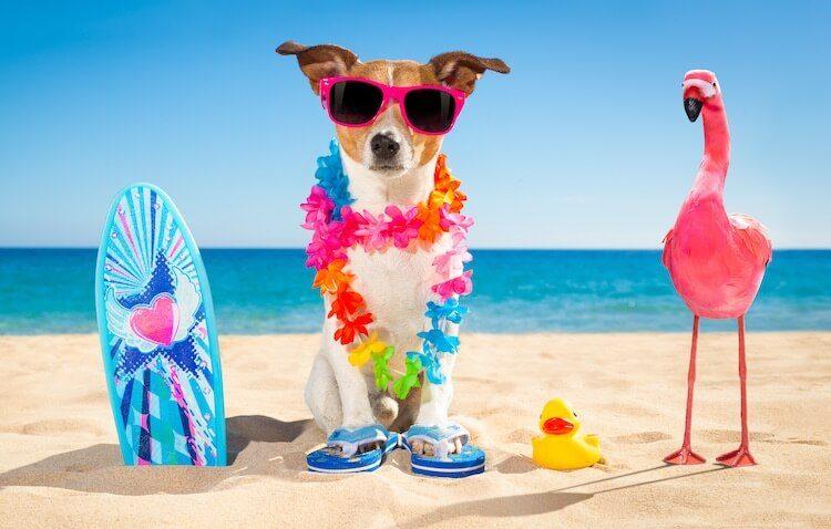 Hawaiian Dog Names for Girls