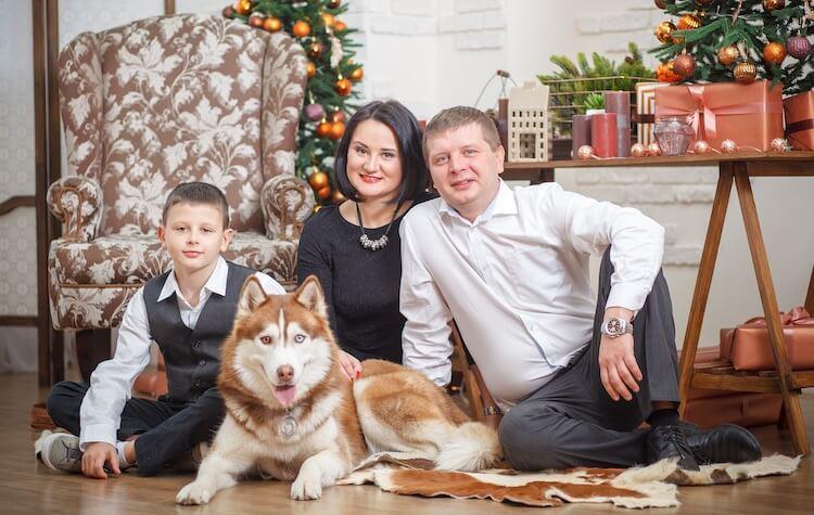 Red Husky Family Dog