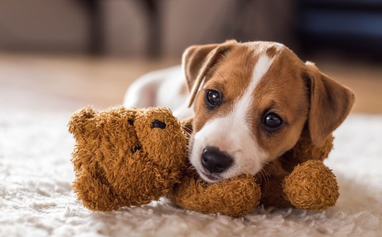 Top 500 Small Dog Names Adorable Cute Tiny Ideas All Things Dogs