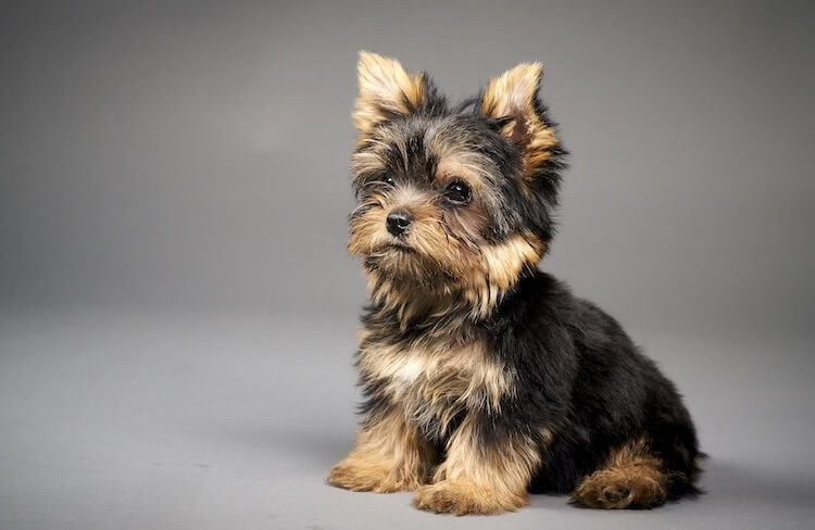Choosing A Puppy Name