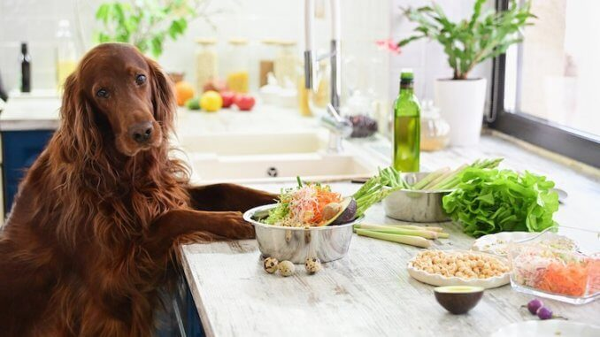 What Can Dogs Eat Feature