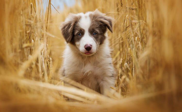 Cute Puppy Being Weighed