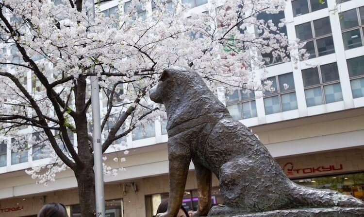 Statue Of An Akita Dog Called Hachiko