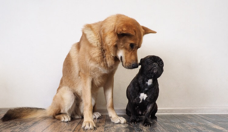 Large Dog and Small Dog Together