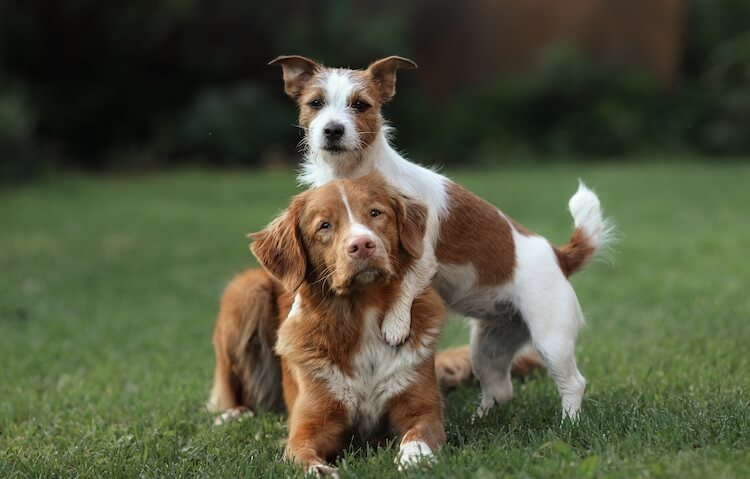 Young and Old Dog