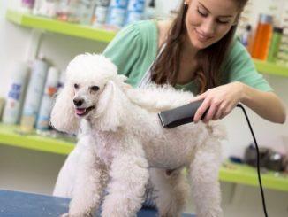poodle-cuts
