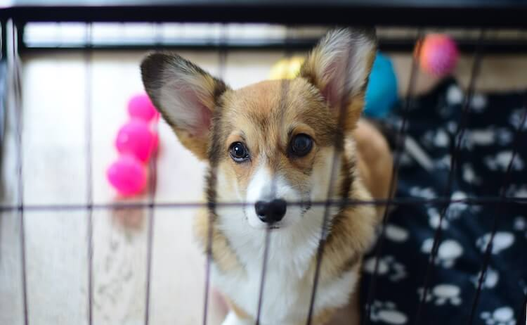 Dog Playing In Crate