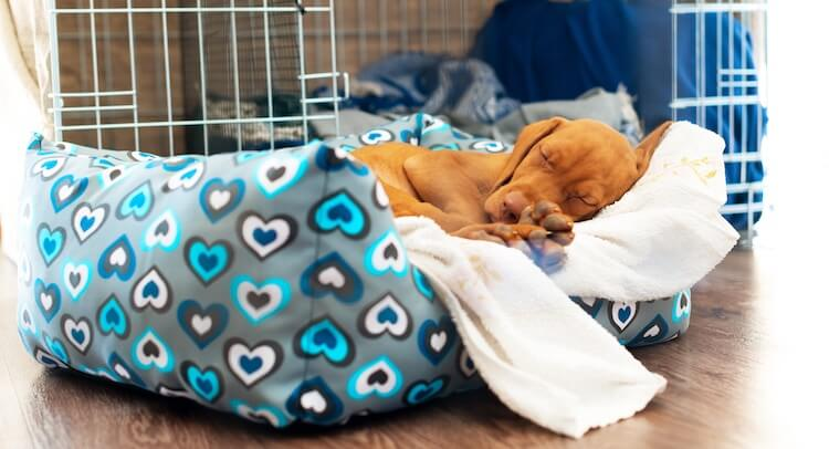 Puppy Sleeping In A Dog Crate