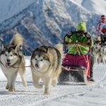 Two Alaskan Malamute Dogs Pulling A Sled