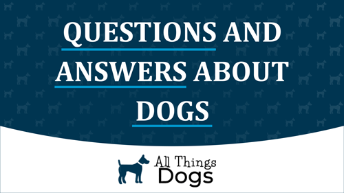 Questions and Answers About Dogs from the Experts at All Things Dogs